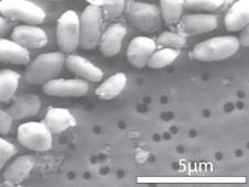 CFAJ-1 Arsenic
